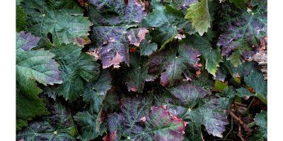 Gesund mit Pflanzenkraft